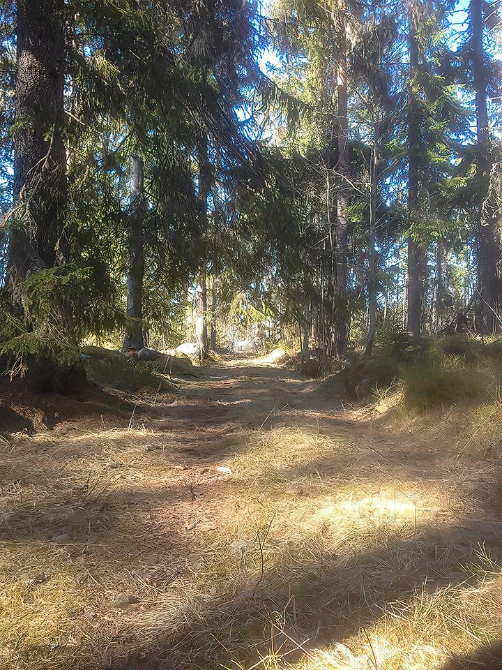 Linjen genom skogen